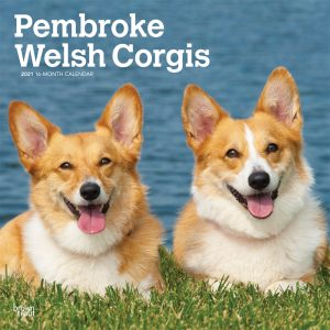 Pembroke Welsh Corgis 2021 12 x 12 Inch Monthly Square Wall Calendar, Animals Dog Breeds