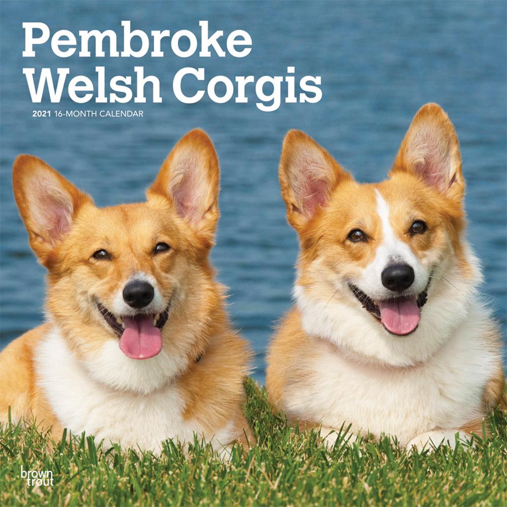 Pembroke Welsh Corgis 2021 12 x 12 Inch Monthly Square Wall Calendar, Animals Dog Breeds