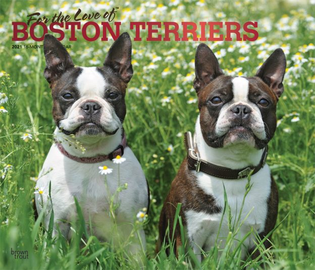 For the Love of Boston Terriers 2021 14 x 12 Inch Monthly Deluxe Wall Calendar with Foil Stamped Cover, Animal Dog Breeds