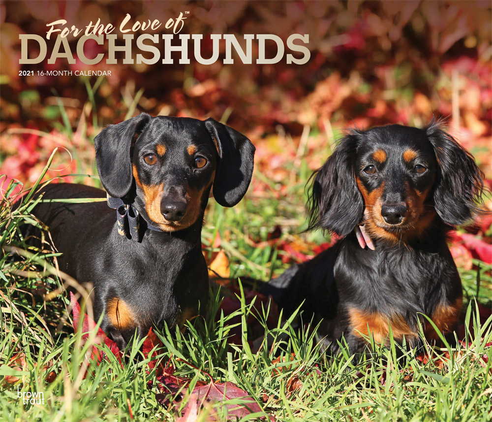 For the Love of Dachshunds 2021 14 x 12 Inch Monthly Deluxe Wall Calendar with Foil Stamped Cover, Animal Dog Breeds Dachshunds