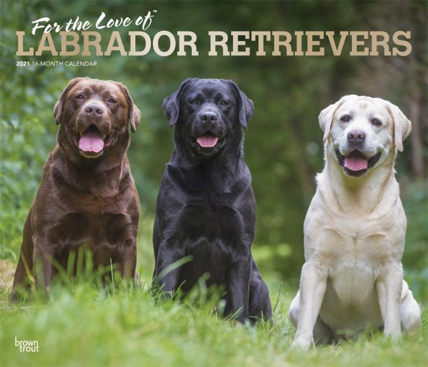For the Love of Labrador Retrievers 2021 14 x 12 Inch Monthly Deluxe Wall Calendar with Foil Stamped Cover, Animal Dog Breeds