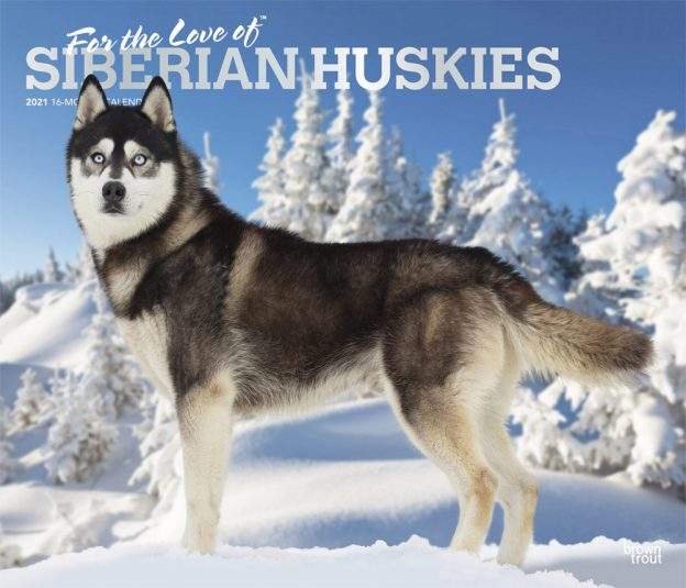 For the Love of Siberian Huskies 2021 14 x 12 Inch Monthly Deluxe Wall Calendar with Foil Stamped Cover, Animal Dog Breeds Husky