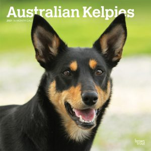 Australian Kelpies 2021 12 x 12 Inch Monthly Square Wall Calendar, Animal Dog Breeds