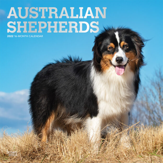 Australian Shepherds 2022 12 x 12 Inch Monthly Square Wall Calendar with Foil Stamped Cover, Animals Dog Breeds DogDays