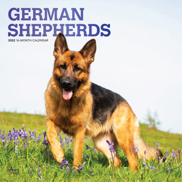 German Shepherds 2022 12 x 12 Inch Monthly Square Wall Calendar with Foil Stamped Cover, Animals Dog Breeds DogDays