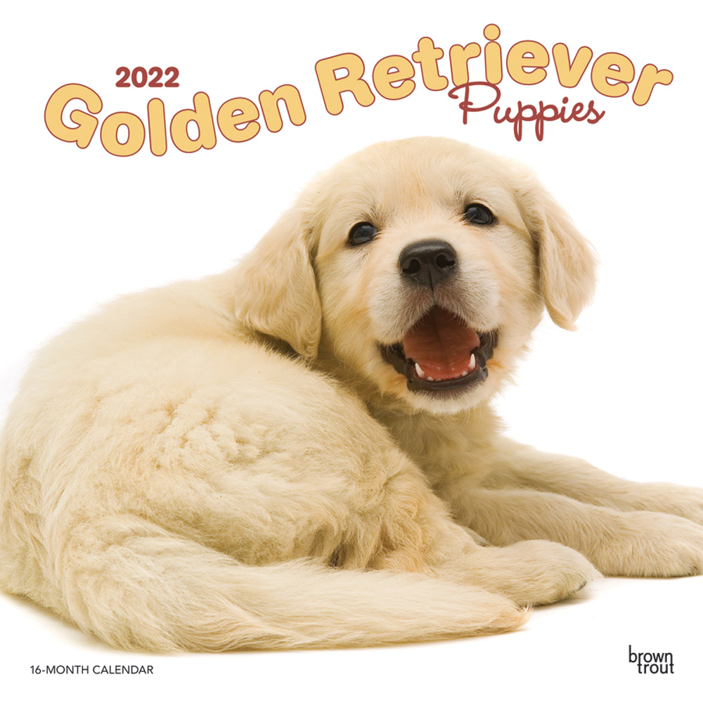 Golden Retriever Puppies 2022 12 x 12 Inch Monthly Square Wall Calendar, Animals Dog Breeds Puppy DogDays