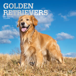 Golden Retrievers 2022 12 x 12 Inch Monthly Square Wall Calendar with Foil Stamped Cover, Animals Dog Breeds Retriever