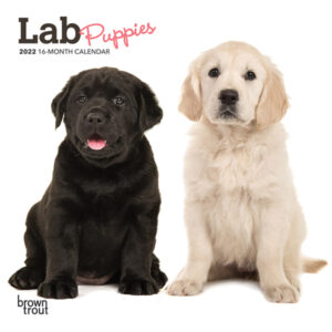 Lab Puppies 2022 7 x 7 Inch Monthly Mini Wall Calendar, Animals Dog Breeds Puppy DogDays