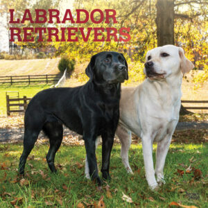 Labrador Retrievers 2022 12 x 12 Inch Monthly Square Wall Calendar with Foil Stamped Cover, Animals Dog Breeds DogDays