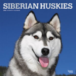 Siberian Huskies 2022 12 x 12 Inch Monthly Square Wall Calendar with Foil Stamped Cover, Animal Dog Breeds DogDays