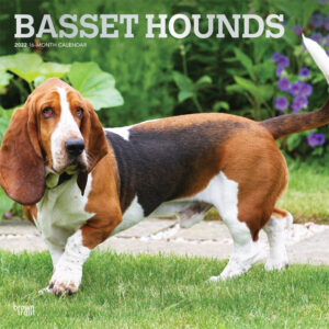 Basset Hounds 2022 12 x 12 Inch Monthly Square Wall Calendar with Foil Stamped Cover, Animals Dog Breeds DogDays