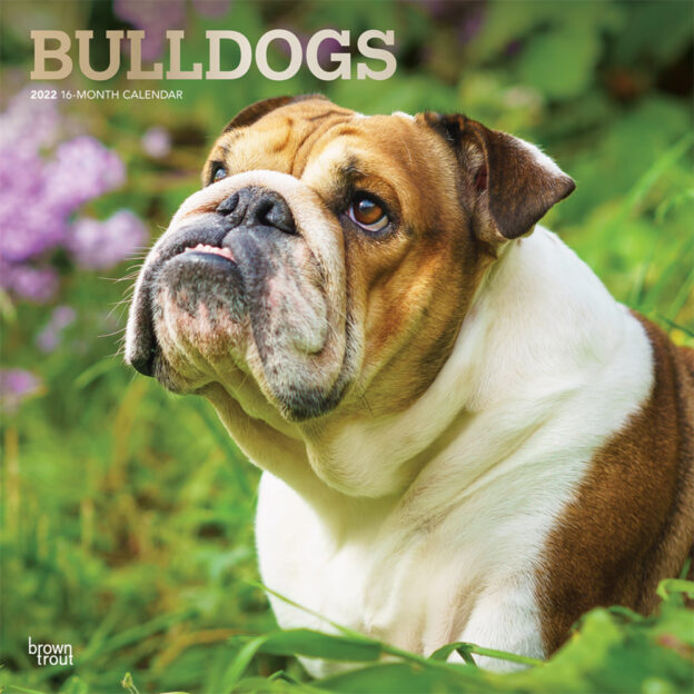 Bulldogs 2022 12 x 12 Inch Monthly Square Wall Calendar with Foil Stamped Cover, Animals Dog Breeds DogDays
