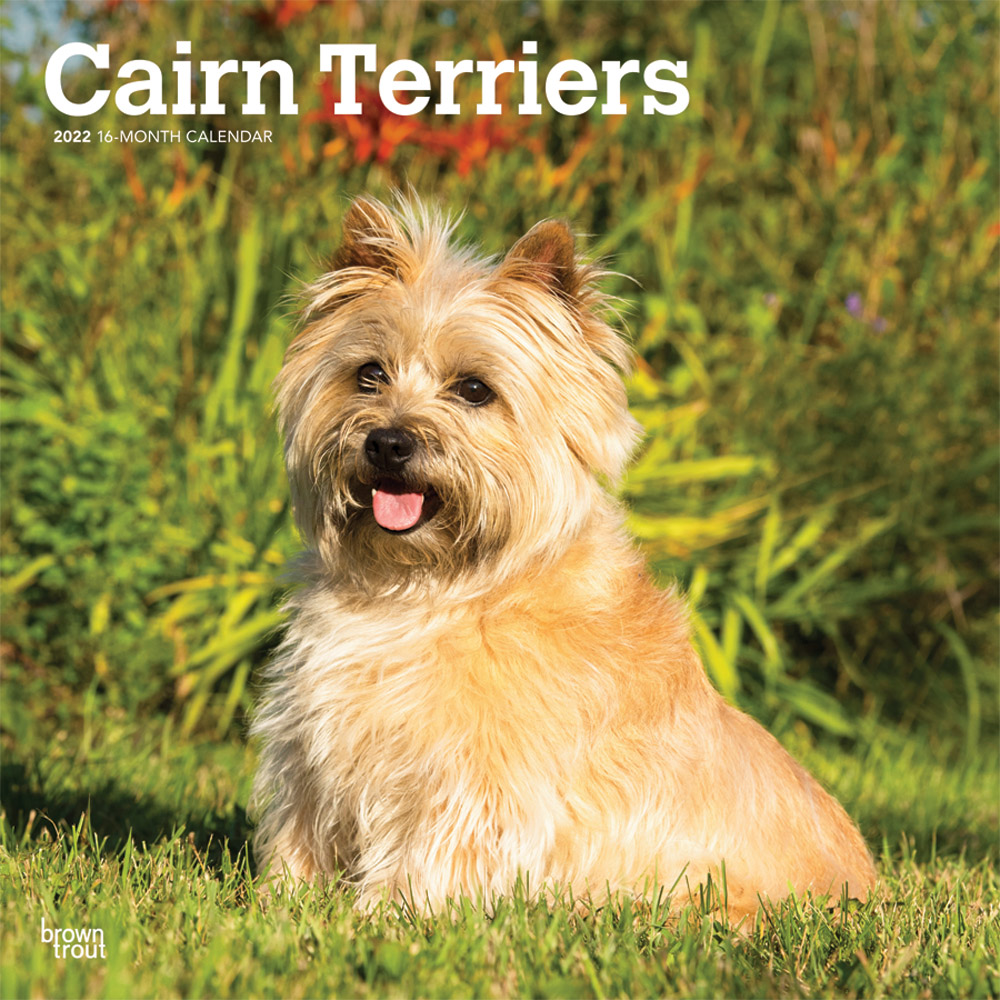 Cairn Terriers 2022 12 x 12 Inch Monthly Square Wall Calendar, Animals Dog Breeds DogDays