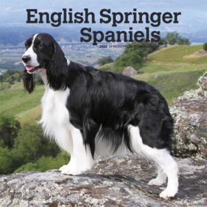 English Springer Spaniels 2022 12 x 12 Inch Monthly Square Wall Calendar, Animals Dog Breeds DogDays