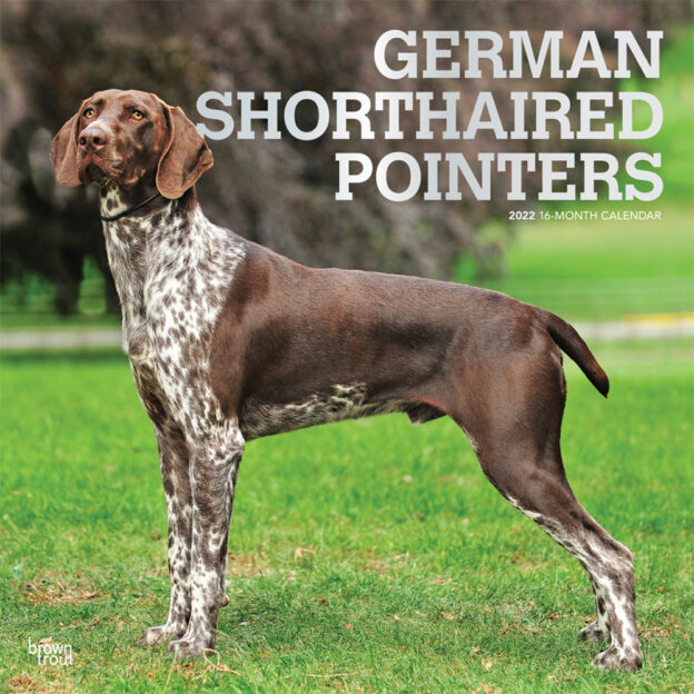 German Shorthaired Pointers 2022 12 x 12 Inch Monthly Square Wall Calendar with Foil Stamped Cover, Animals Dog Breeds DogDays