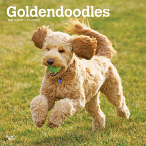 Goldendoodles 2022 12 x 12 Inch Monthly Square Wall Calendar, Animals Mixed Dog Breeds DogDays