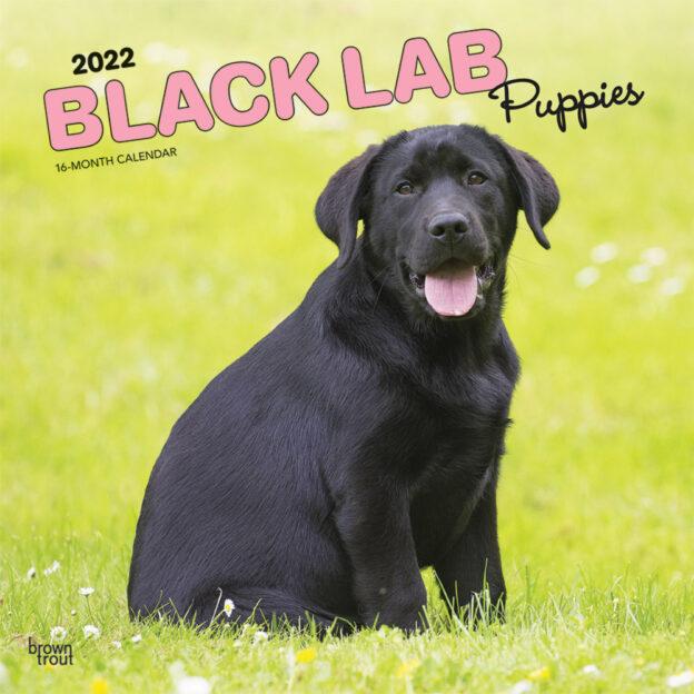Black Labrador Retriever Puppies 2022 12 x 12 Inch Monthly Square Wall Calendar, Animals Dog Breeds Puppy DogDays