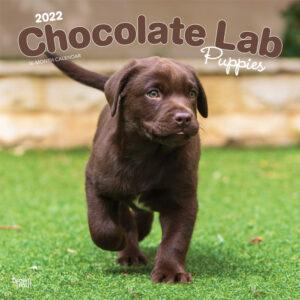 Chocolate Labrador Retriever Puppies 2022 12 x 12 Inch Monthly Square Wall Calendar, Animals Dog Breeds Puppy DogDays