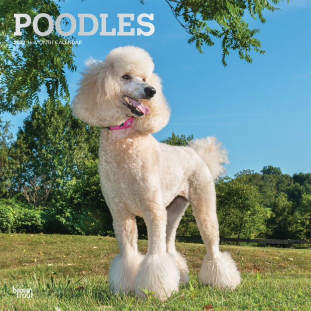 Poodles 2022 12 x 12 Inch Monthly Square Wall Calendar with Foil Stamped Cover, Animals Dog Breeds DogDays