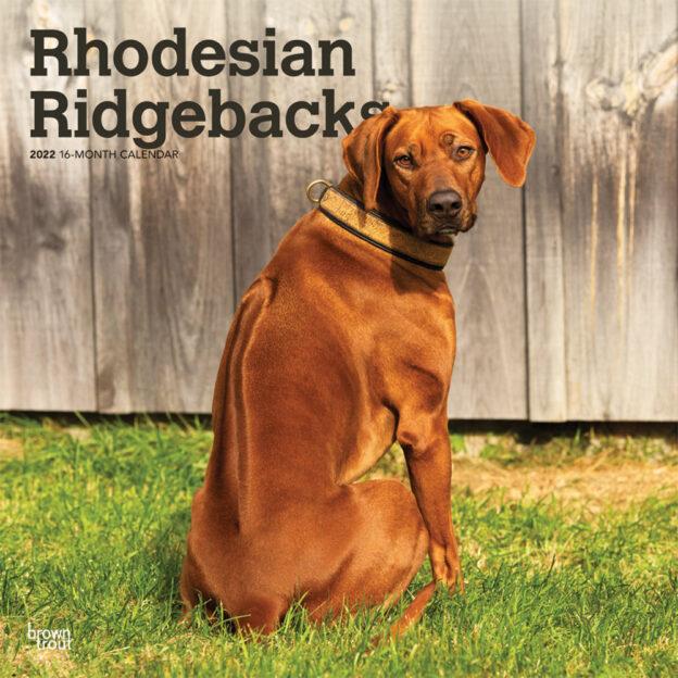 Rhodesian Ridgebacks 2022 12 x 12 Inch Monthly Square Wall Calendar, Animals Dog Breeds DogDays