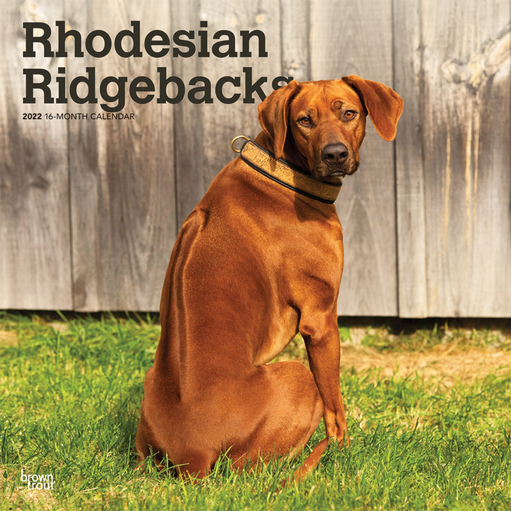 Rhodesian Ridgebacks 2022 12 x 12 Inch Monthly Square Wall Calendar, Animals Dog Breeds DogDays