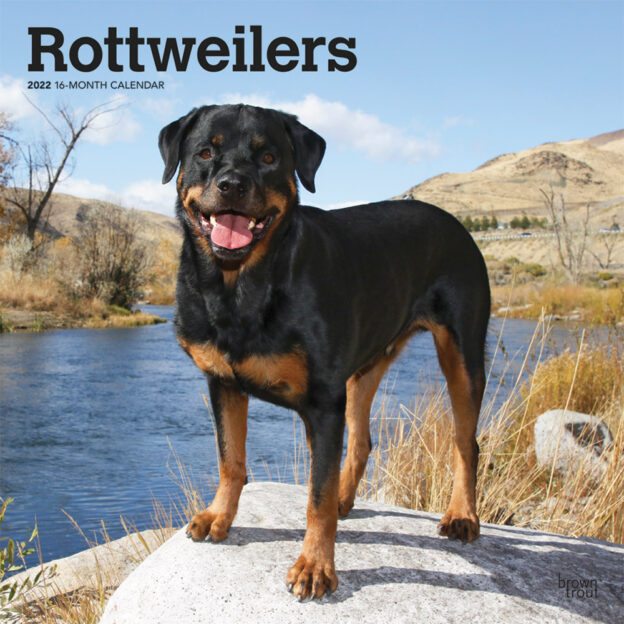 Rottweilers 2022 12 x 12 Inch Monthly Square Wall Calendar, Animals Dog Breeds DogDays