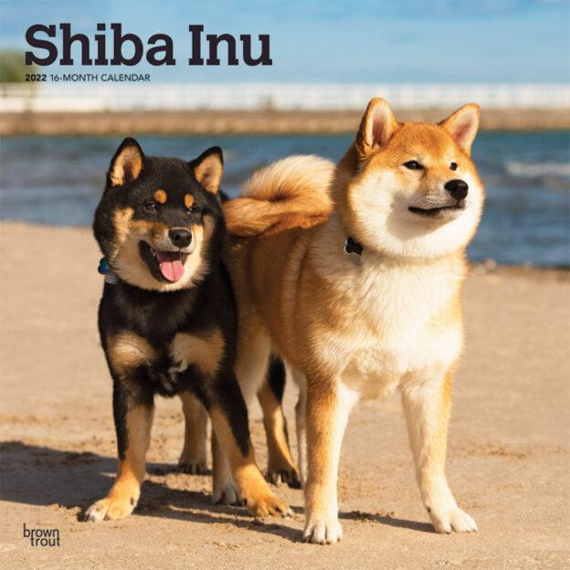 Shiba Inu 2022 12 x 12 Inch Monthly Square Wall Calendar, Animals Asian Dog Breeds DogDays