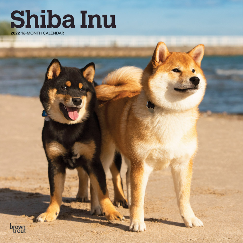 Shiba Inu 2022 12 x 12 Inch Monthly Square Wall Calendar, Animals Asian Dog Breeds DogDays