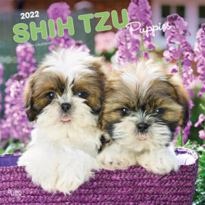 Shih Tzu Puppies 2022 12 x 12 Inch Monthly Square Wall Calendar, Animal Small Dog Breed Puppy DogDays