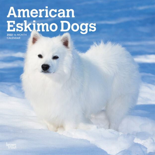 American Eskimo Dogs 2022 12 x 12 Inch Monthly Square Wall Calendar, Animals Dog Breeds DogDays