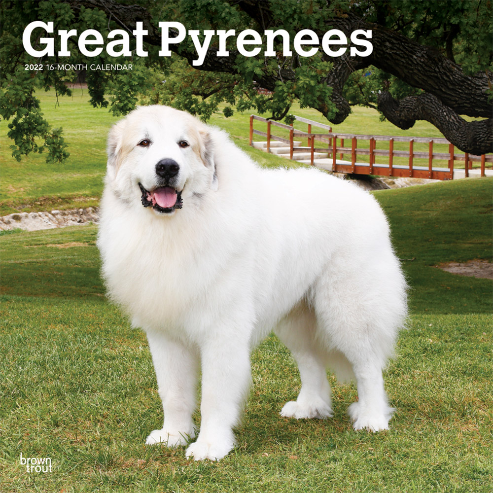 Great Pyrenees 2022 12 x 12 Inch Monthly Square Wall Calendar, Animals Dog Breeds DogDays