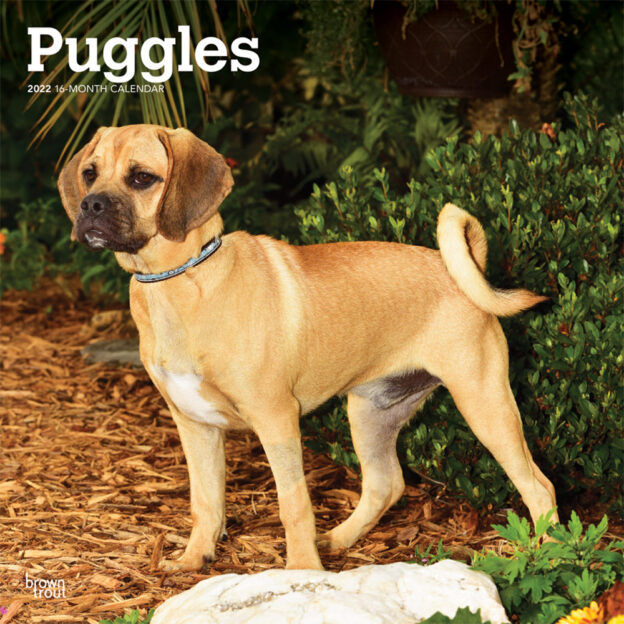 Puggles 2022 12 x 12 Inch Monthly Square Wall Calendar, Animals Mixed Dog Breeds DogDays