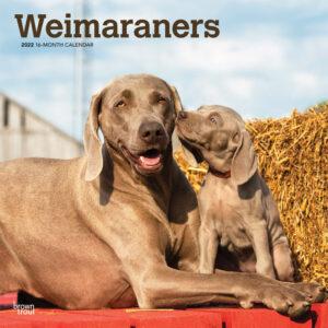 Weimaraners 2022 12 x 12 Inch Monthly Square Wall Calendar, Animals Dog Breeds DogDays
