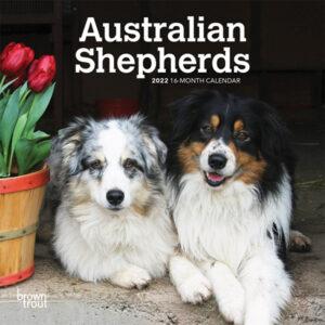 Australian Shepherds 2022 7 x 7 Inch Monthly Mini Wall Calendar, Animals Dog Breeds DogDays