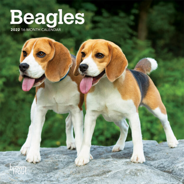 Beagles 2022 7 x 7 Inch Monthly Mini Wall Calendar, Animals Dog Breeds DogDays