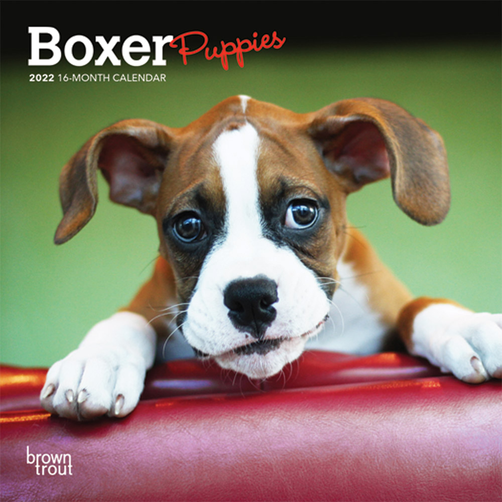 Boxer Puppies 2022 7 x 7 Inch Monthly Mini Wall Calendar, Animals Dog Breeds Puppy DogDays