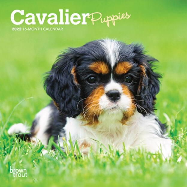 Cavalier King Charles Spaniel Puppies 2022 7 x 7 Inch Monthly Mini Wall Calendar, Animals Dog Breeds Puppy DogDays