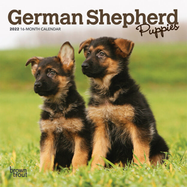 German Shepherd Puppies 2022 7 x 7 Inch Monthly Mini Wall Calendar, Animals Dog Breeds Puppy DogDays