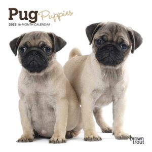 Pug Puppies 2022 7 x 7 Inch Monthly Mini Wall Calendar, Animals Dog Breeds Puppy DogDays