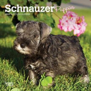 Schnauzer Puppies 2022 7 x 7 Inch Monthly Mini Wall Calendar, Animals Dog Breeds Puppy DogDays