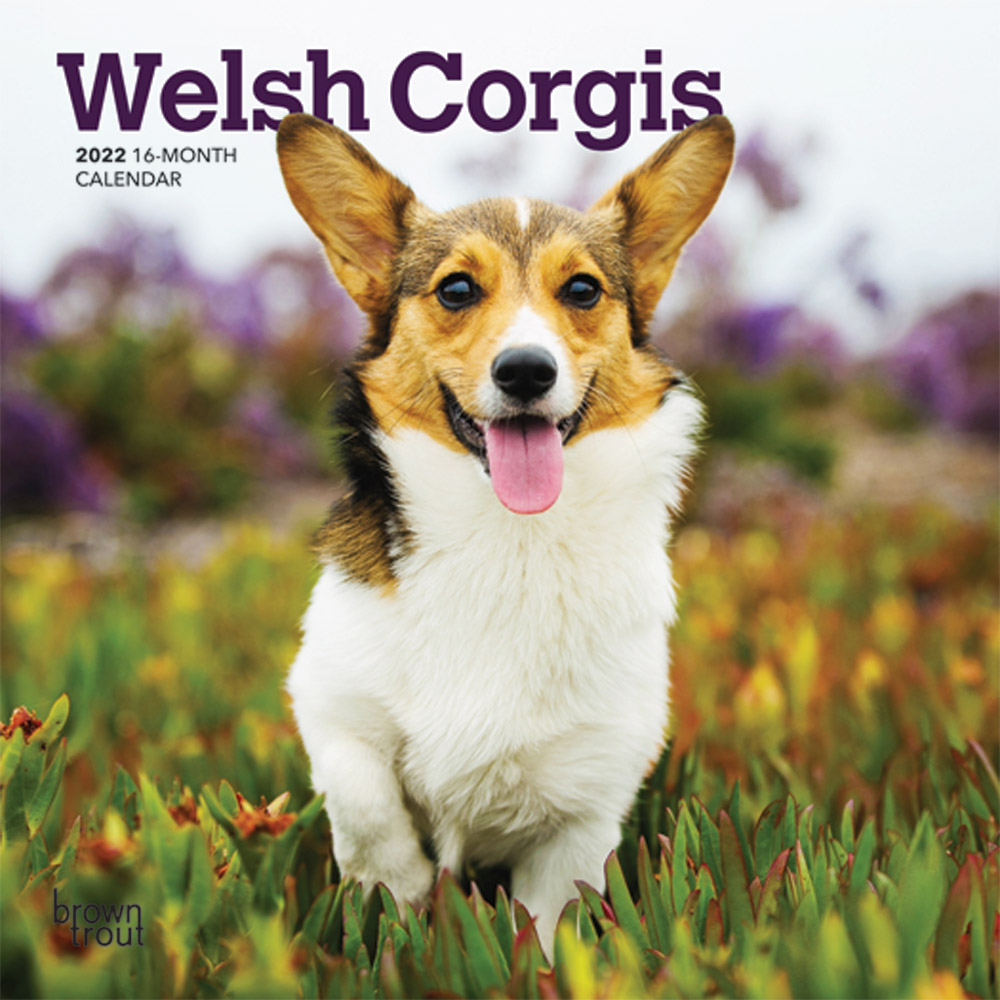Welsh Corgis 2022 7 x 7 Inch Monthly Mini Wall Calendar, Animals Dog Breeds DogDays