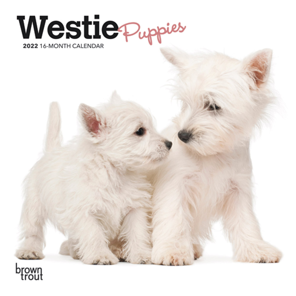 West Highland White Terrier Puppies 2022 7 x 7 Inch Monthly Mini Wall Calendar, Animals Dog Breeds Puppy DogDays