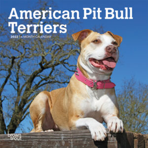 American Pit Bull Terriers 2022 7 x 7 Inch Monthly Mini Wall Calendar, Animals Dog Breeds DogDays