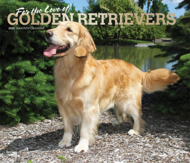 For the Love of Golden Retrievers 2022 14 x 12 Inch Monthly Deluxe Wall Calendar with Foil Stamped Cover, Animal Dog Breeds DogDays