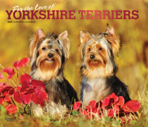 For the Love of Yorkshire Terriers 2022 14 x 12 Inch Monthly Deluxe Wall Calendar with Foil Stamped Cover, Animal Small Dog Breeds DogDays