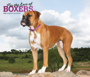 For the Love of Boxers 2022 14 x 12 Inch Monthly Deluxe Wall Calendar with Foil Stamped Cover, Animal Dog Breeds DogDays