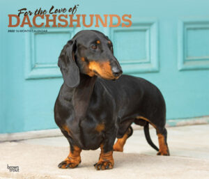 For the Love of Dachshunds 2022 14 x 12 Inch Monthly Deluxe Wall Calendar with Foil Stamped Cover, Animal Dog Breeds DogDays