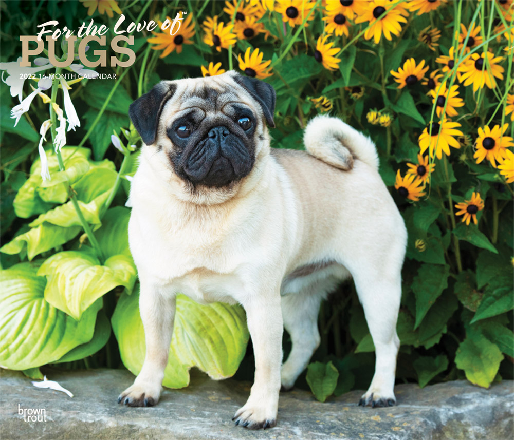 For the Love of Pugs 2022 14 x 12 Inch Monthly Deluxe Wall Calendar with Foil Stamped Cover, Animals Dog Breeds DogDays