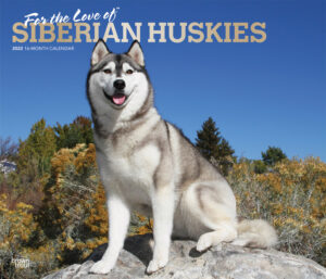 For the Love of Siberian Huskies 2022 14 x 12 Inch Monthly Deluxe Wall Calendar with Foil Stamped Cover, Animal Dog Breeds Husky DogDays