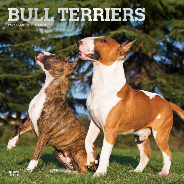 Bull Terriers 2022 12 x 12 Inch Monthly Square Wall Calendar, Animals Dog Breeds DogDays